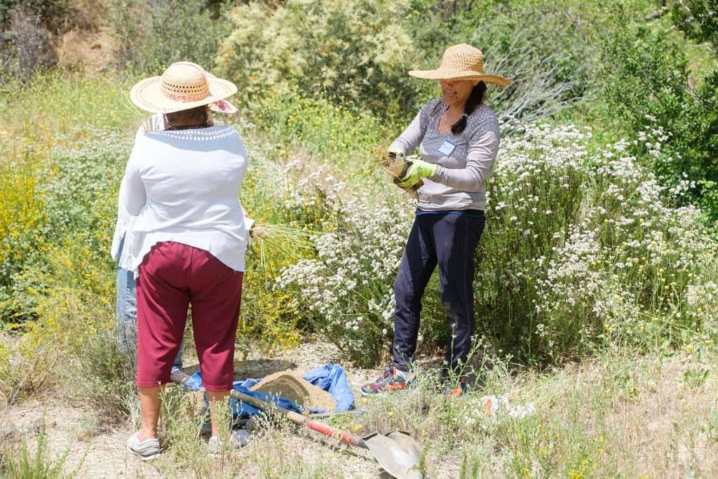 Padres Pioneros Sayre Site Plant-013